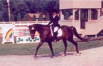 horseoutsideshowring.jpg